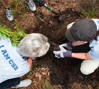 volunteers-working-soil
