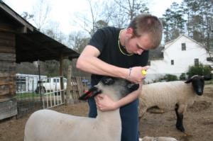 FFA bottle feed goat